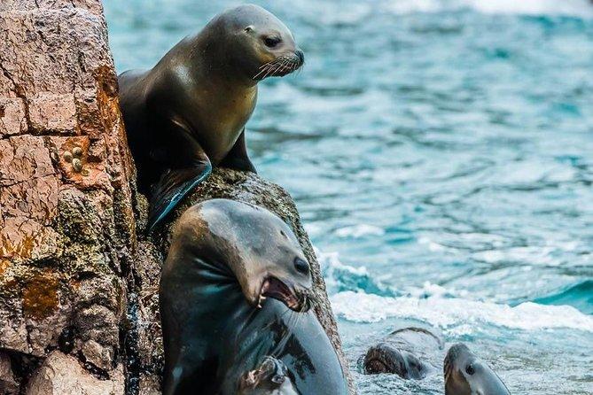 Ballestas Islands + Paracas National Reserve (From Paracas)