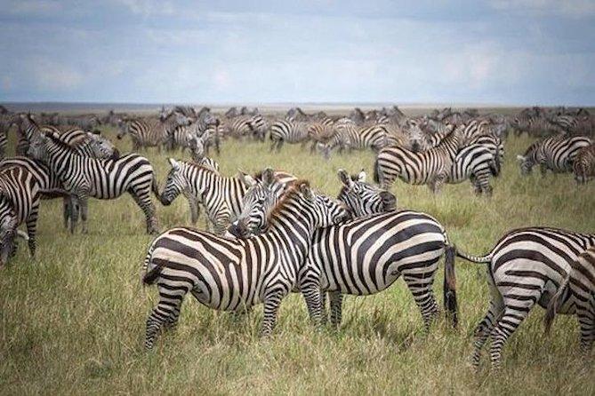 9-Day Safari & Zanzibar beach holiday-Tarangire, Serengeti, Ngorongoro, Manyara