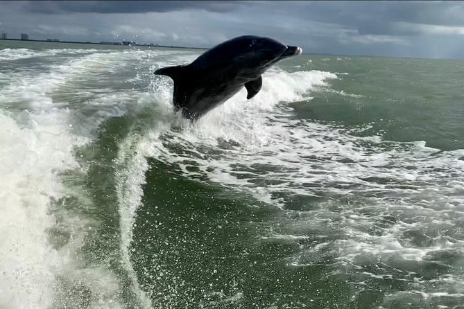 Dolphin Tours - Fort Myers Beach / Estero Bay photo 6