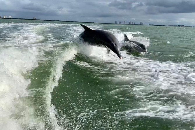 Dolphin Tours - Fort Myers Beach / Estero Bay photo 18