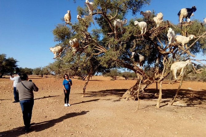 Essaouira Day Trip from Marrakech
