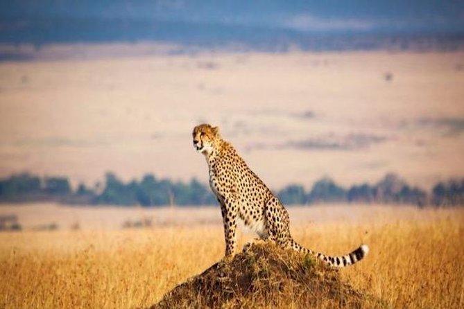 3 Day Safari-Serengeti & Ngorongoro National Parks