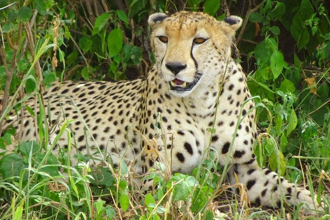 8 Days 7 Night Best of Tanzania Safaris