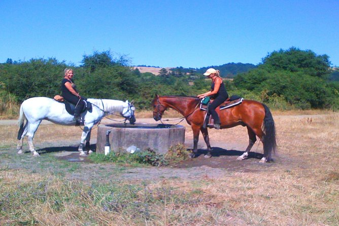 Private Horseback Riding and Muir Woods Adventure from San Francisco