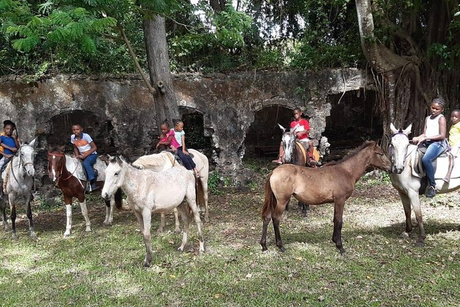 East Coast Riding Stable: Horseback Riding Excursion St. Lucia photo 8