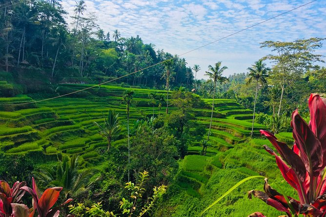 Bali Downtown Tour and Purification