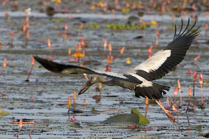 Private Tour: Full-Day Bird Safari Excursion to Bhigwan from Pune