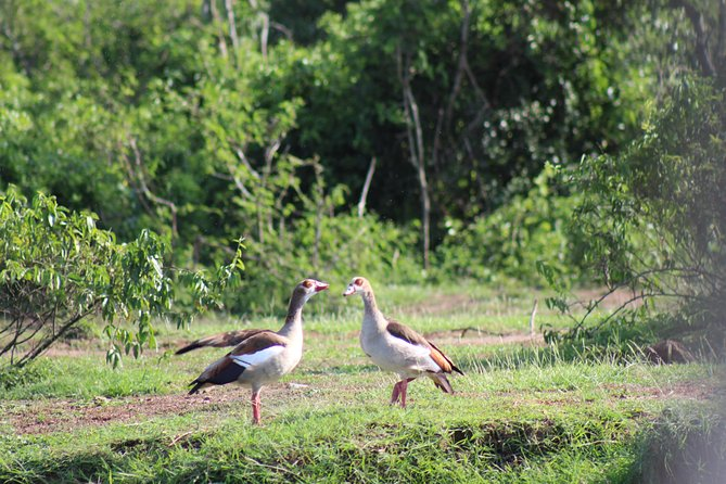 African Birds Uganda Birding 19 Day Safari
