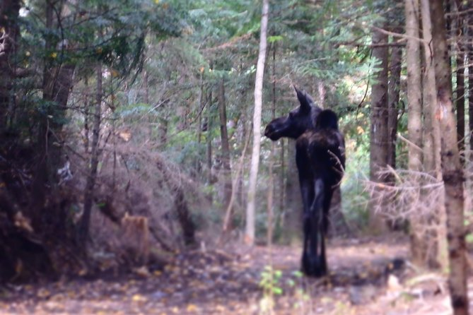 """""""Moose On The Loose"""" 4-Day Canadian Roadtrip"""
