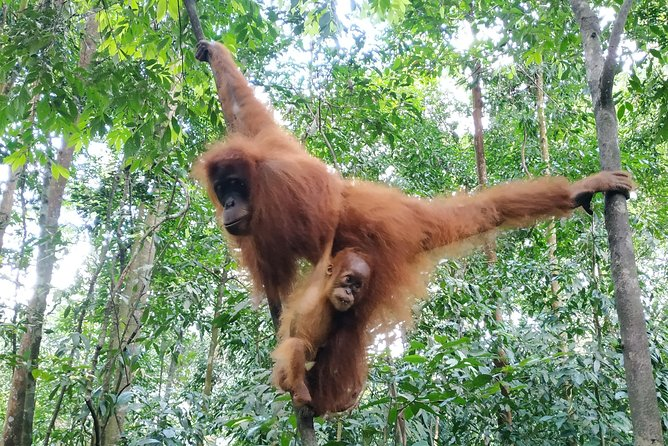 6 Days Bukit Lawang - Berastagi Tour (2D1N Jungle Treking + Sunrise Hiking)