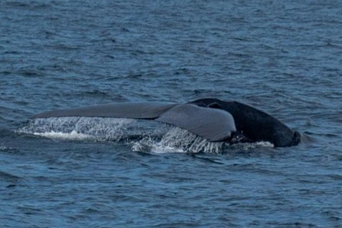 whale-watching-sri-lanka