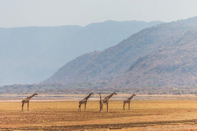 2 Days Ngorongoro Crater & Lake Manyara Luxury Safari photo 7