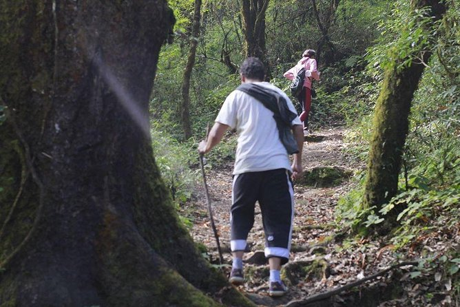 Shivapuri Day Hiking