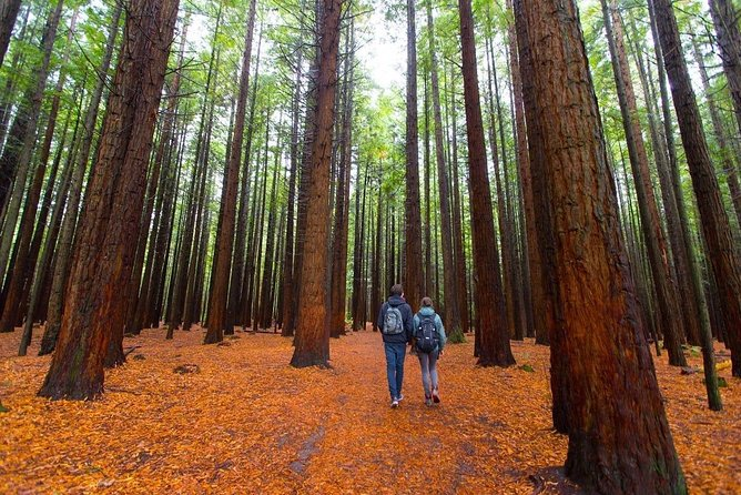 Redwood Forest , Blue Springs & Huka Falls Day Tour from Auckland