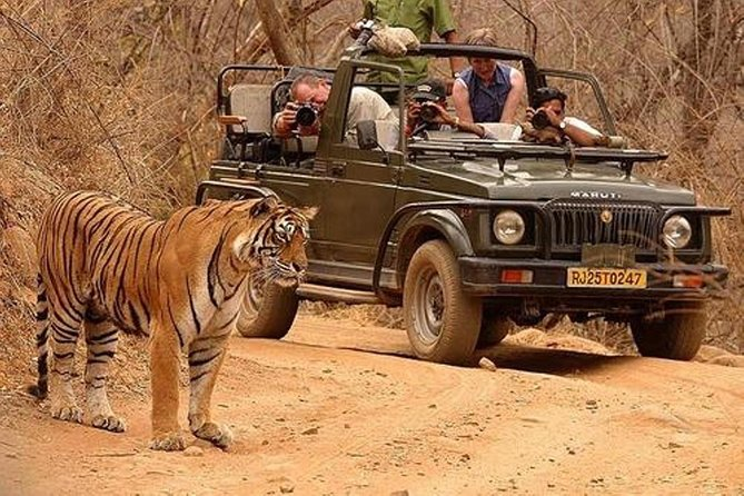 Ranthambore Wildlife (Tiger Safari) Day Tour from Jaipur