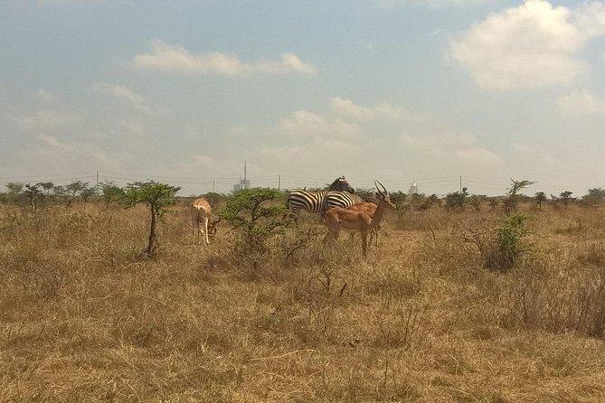 4 days masai mara camping