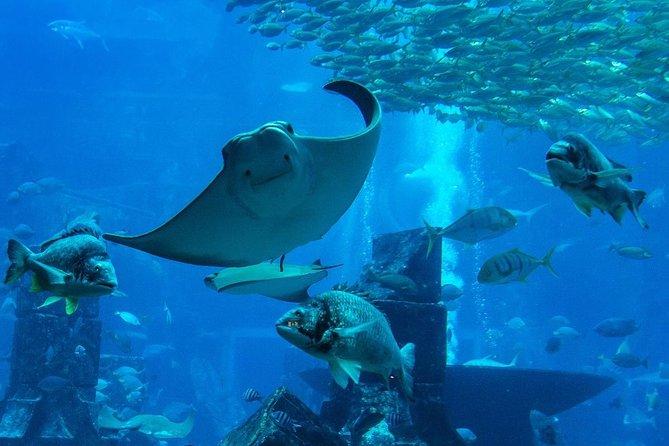 Burj Khalifa, Dubai aquarium and Underwater zoo Combo