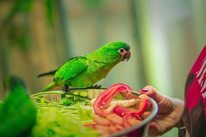 Skip the Line: Parrots show Amazonia Ticket