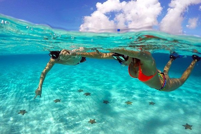 COZUMEL SNORKEL PLUS: Discover de Marine Life of each of the reefs