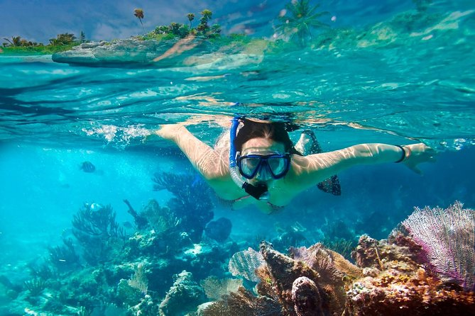 COZUMEL SNORKEL PLUS: Discover the depths of the Caribbean Sea