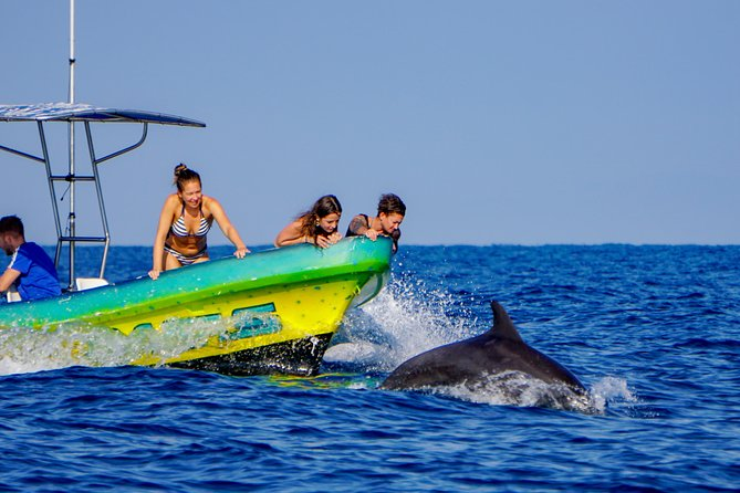 Dolphin Watching Tour