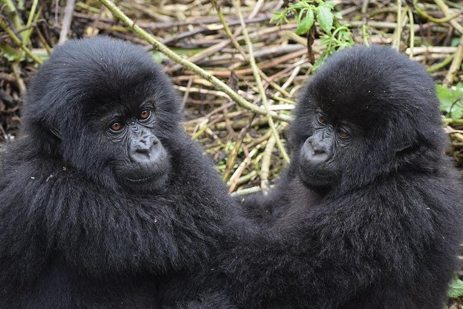 Uganda Queen Elizabeth Park and Bwindi Forest Gorilla Wildlife 5 Day Safari