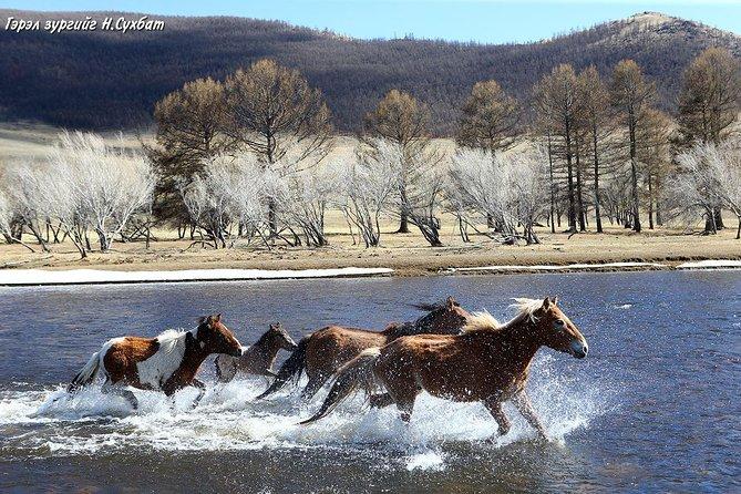 2 Days Semi Gobi Desert and Khustai National Park