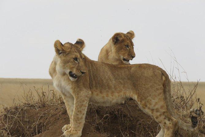 3 Days Tanzania Classic Adventure