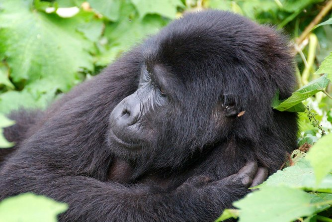 Complete Uganda Wildlife and Gorilla Trekking 11 Day Safari photo 1