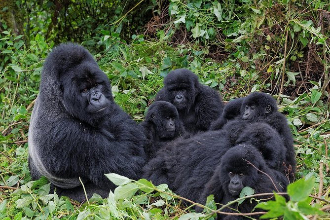 Complete Uganda Wildlife and Gorilla Trekking 11 Day Safari photo 17