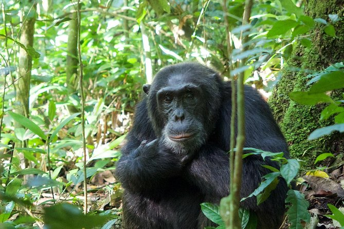 Complete Uganda Wildlife and Gorilla Trekking 11 Day Safari photo 15
