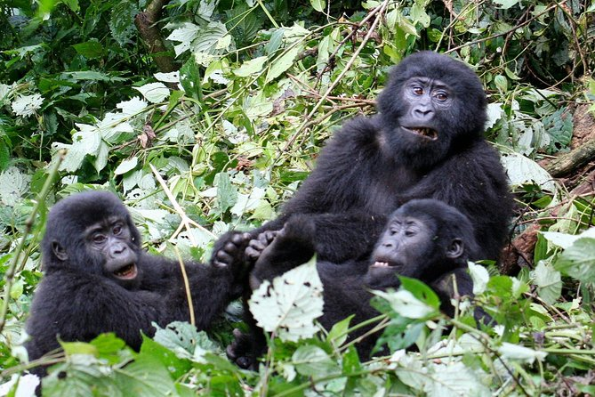 Uganda the Pearl of Africa Complete Wildlife 20 Day Safari photo 20