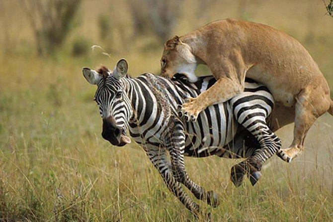 6 Days 5 Nights Masai Mara-Nakuru-Amboseli Wild Safari (joining budget)