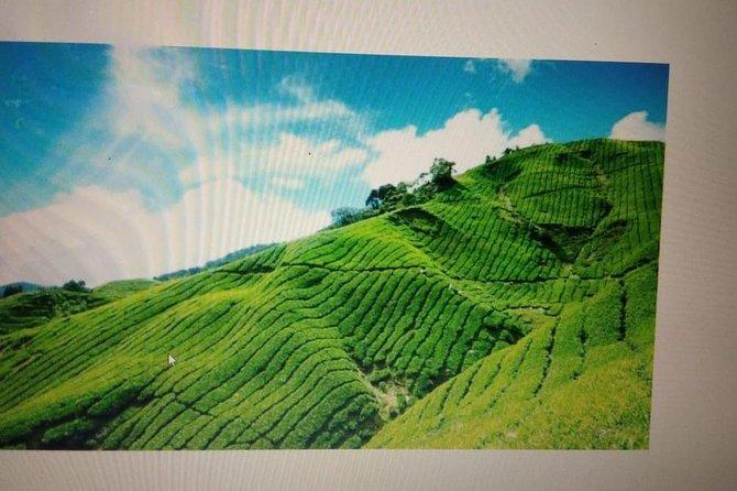 Kerala Honeymoon Package
