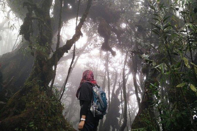 Mount Irau Mossy Trek