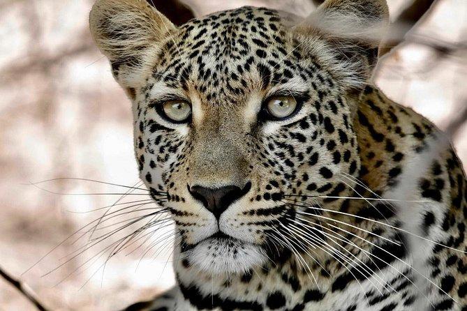 Chobe and Victoria Falls Safari 3 Days @ Kingdom