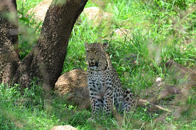 African Safari in Pilanesberg National Park - 1 day adventure