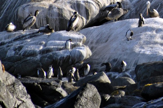 Coastal Trekking, Penguins and Marine Biodiversity