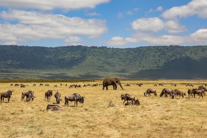 1 Day Ngorongoro Crater & Maasai Boma