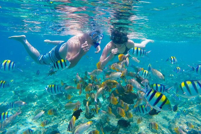 private tours and Snorkeling Gili nanggu photo 6