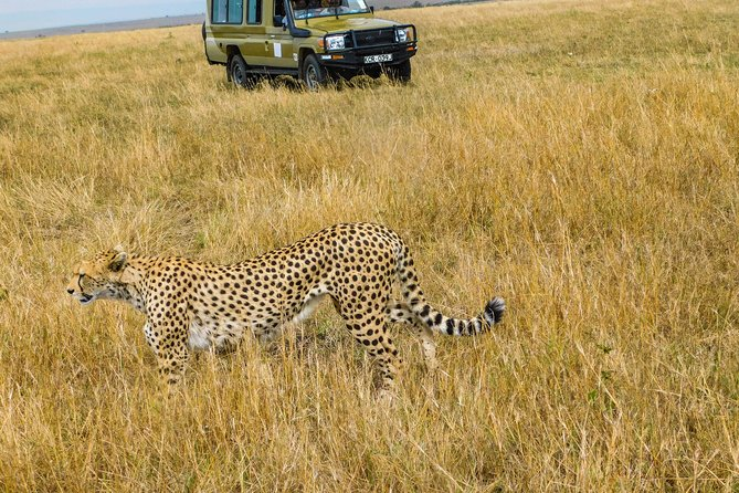 3 Days 2 Nights Private Safari to the Masai Mara National Reserve