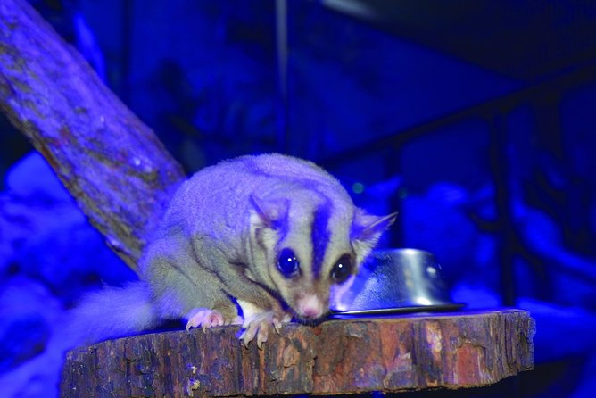 Kuranda Koala Gardens and Birdworld Admission Tickets