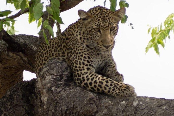 3 Days Explore Selous Game Reserve + Boat safari + bushman walking