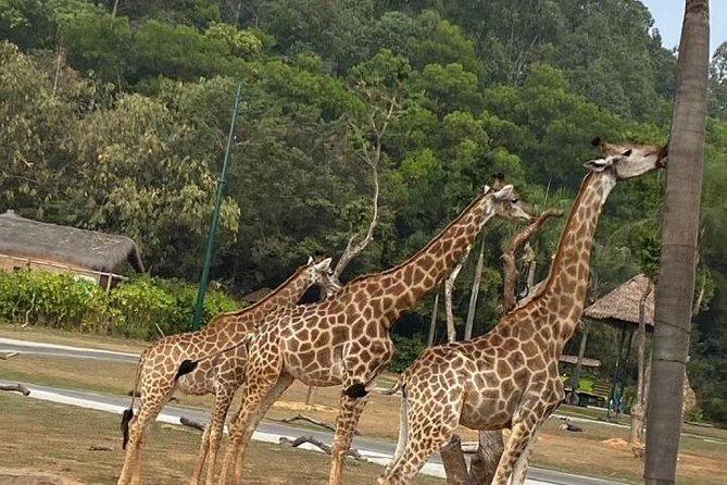 Guangzhou Chimelong Safari Park private tour