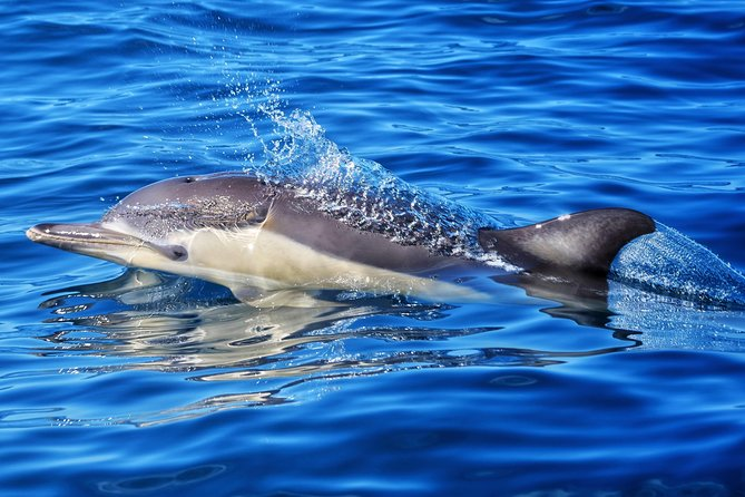 Swim With Wild Dolphins in Tauranga