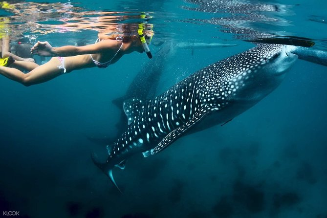 Whale Shark Watching with Tumalog Falls & Oslob Cuartel
