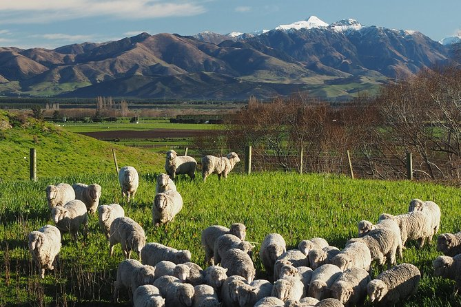 Wine Tasting & Sheep Farm Tour