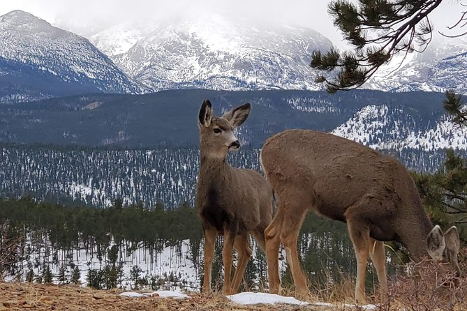 Rocky Mountain National Park Lower Valley Half-Day Tour