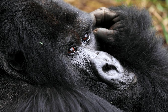 Uganda - Rwanda Wildlife and Primate Outdoor 21 Day Safari