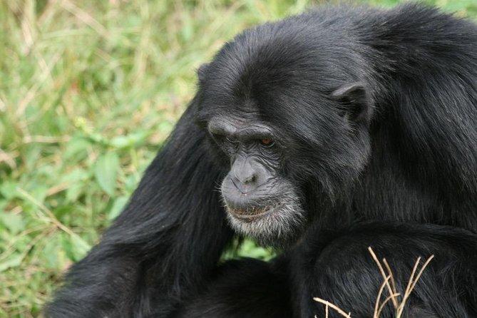 Entebbe Zoo (UWEC) – Chimpanzee Trekking in Ngamba Island 1 Day Tour